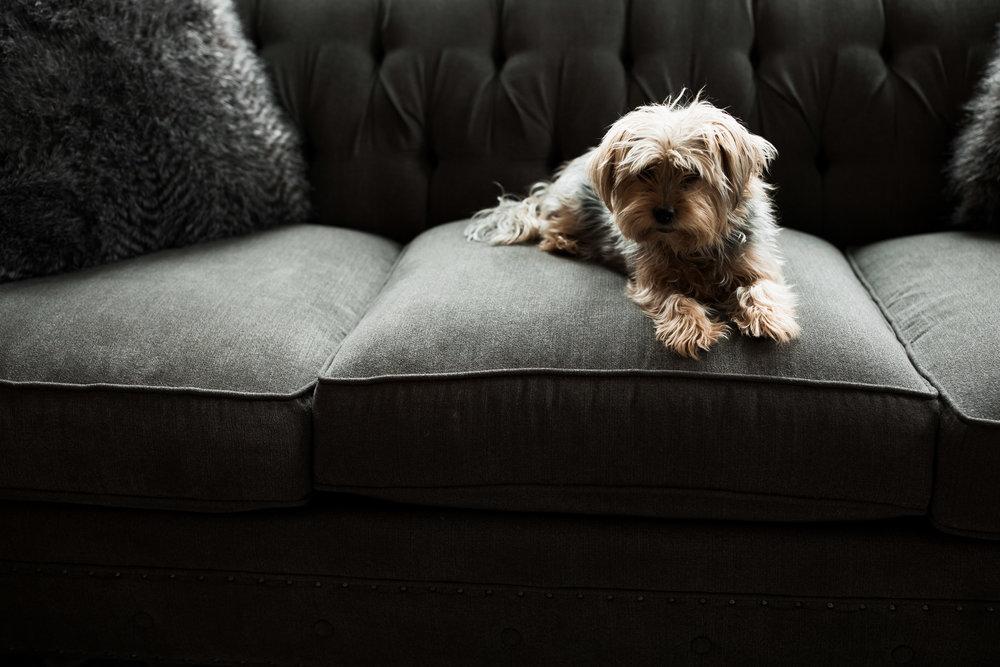 Shirley Lynne Photography-5239.jpg