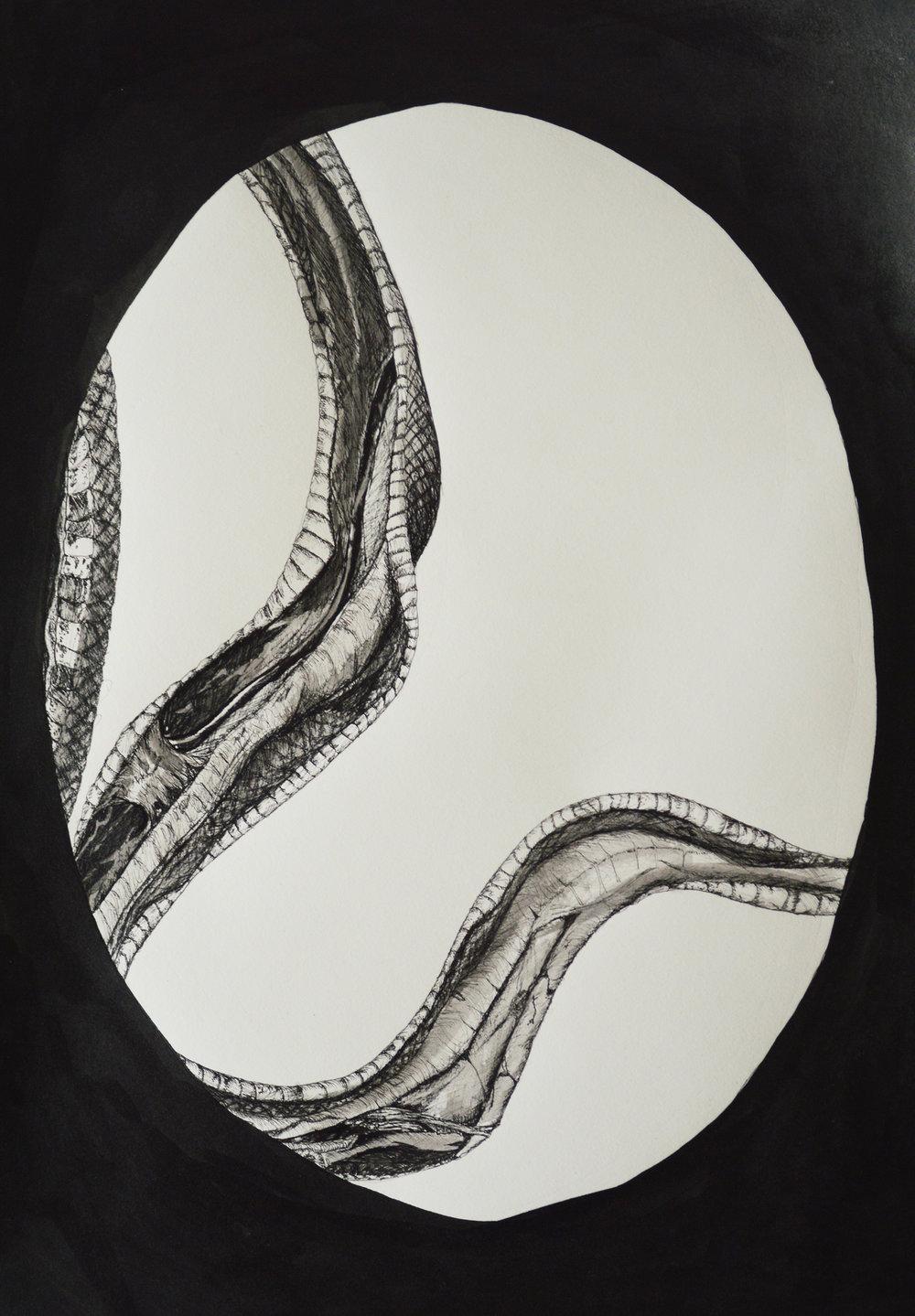 Skinned Snake