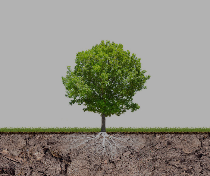 Tree 30% Opactiy.jpg