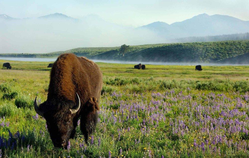 724485-Yellowstone-National-Park-East.jpg