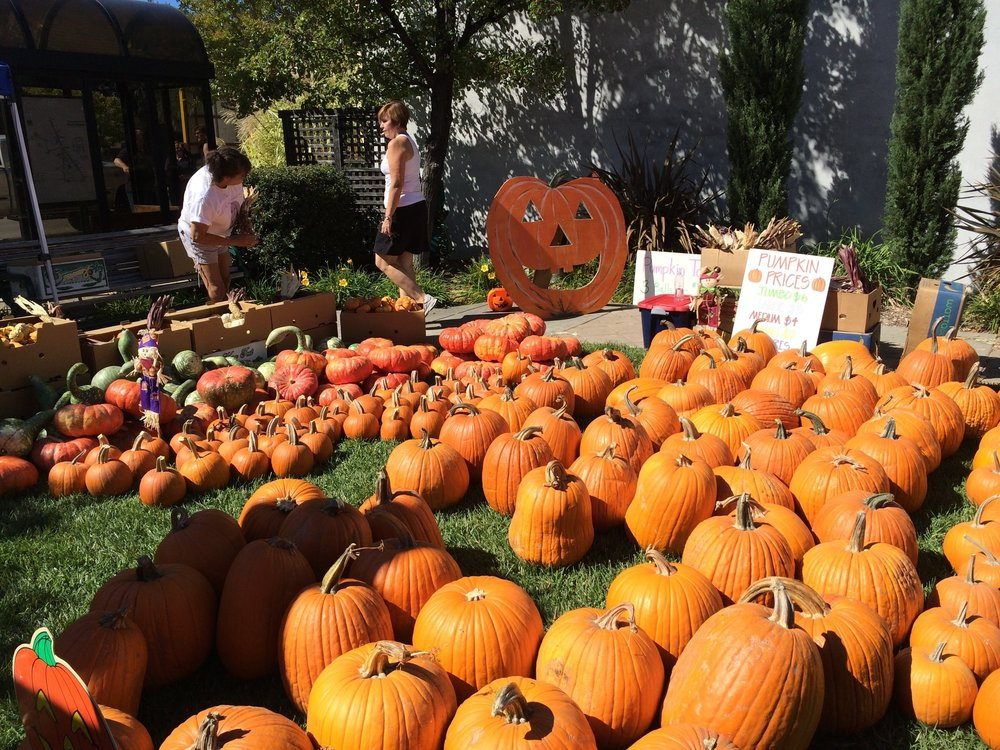 Pumpkins For Sale - Come to Courtney's Pumpkin Patch to buy your Halloween pumpkins.   We have all sizes, shapes, colors and varieties including gourds and specialty pumpkins.   Halloween candy, goodies, prizes, Icee drinks and games.