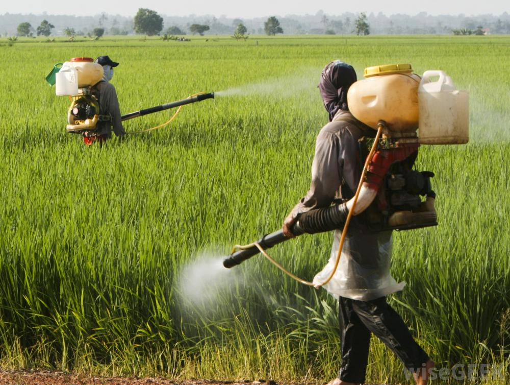 spraying-pesticides-on-field.jpg
