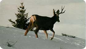 post-deer.jpg