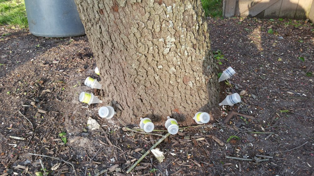 Get rid of gum balls - Micro Injections of deflowering agent in sweet gum (Liquid amber) trees to stop them from producing those pesky balls.