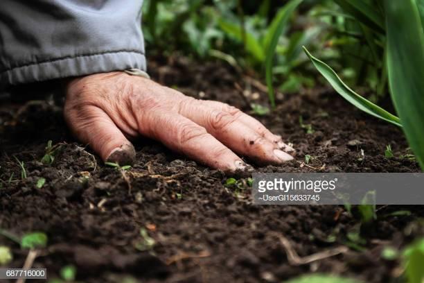 Fertilization -