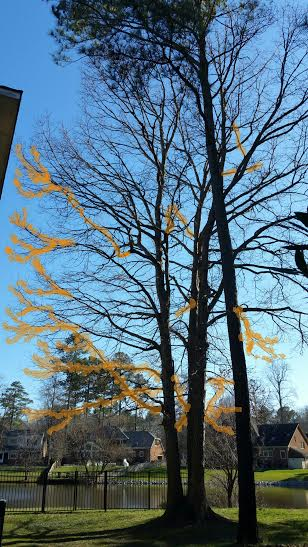 Deadwood Pruning & Tree Canopy Evaluations -