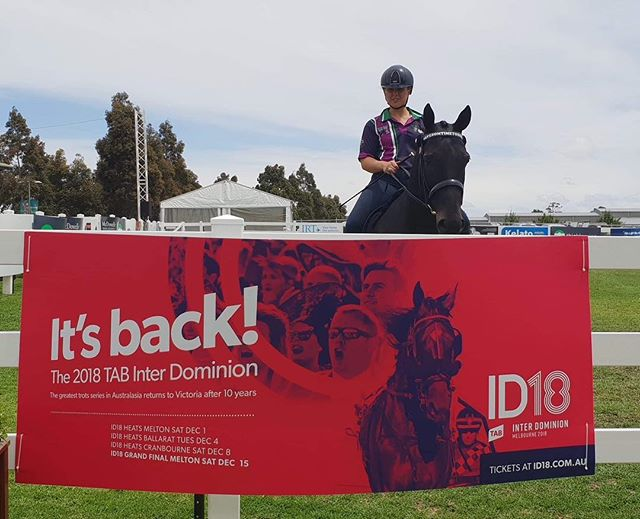 HERO horse 'Buck' aka Savesometimetodream checking out the #ID18 promo at Equitana this weekend. Make sure you head to the breeding village to check out @hrvhero if you are there this weekend! #ID18 #itsback #harnessracing