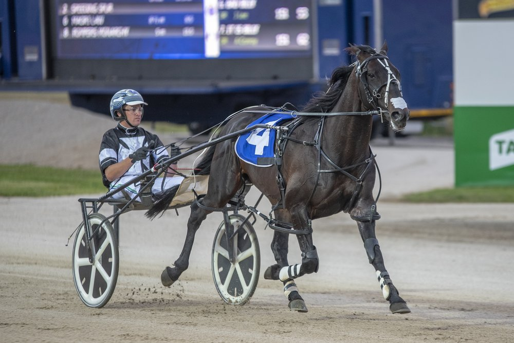 Tiger Tara, TAB Inter Dominion Trotting Championship 3rd Round Heat 2 Winner