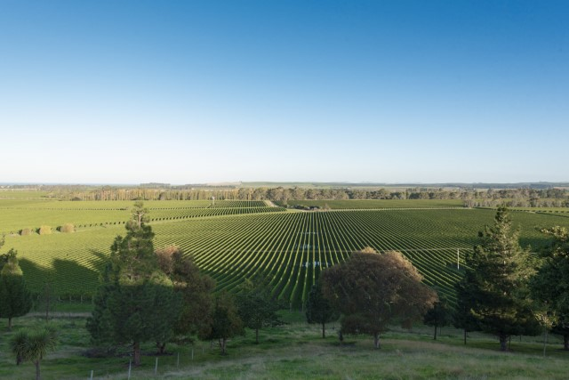 Toi Downs - The lower Dashwood area of the Awatere Valley is home to Toi Downs and 80 hectares of silt clay loam predominately planted in Sauvignon Blanc. Nestled under the foothills to the north, the vineyard enjoys some respite from wind and a long growing season from the maritime influence. The flavour that develops as a result is intense with strong acidity and fantastic palate weight.