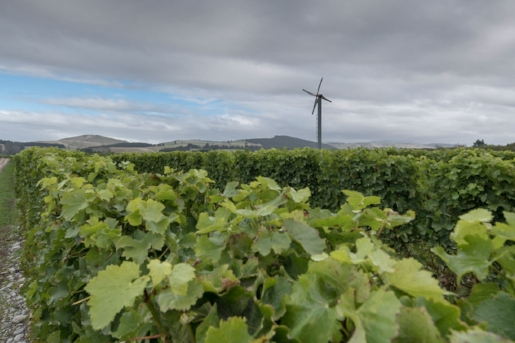 Centre Valley - This prime 78 hectare vineyard has the Wairau River running the length of its Northern boundary. The vineyard is located on two river terraces consisting of friable stony silt loams over gravels.