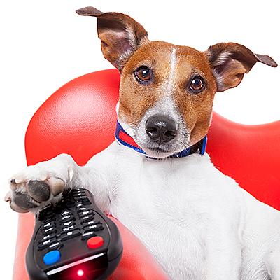 bigstock-Dog-Tv-69962776.jpg