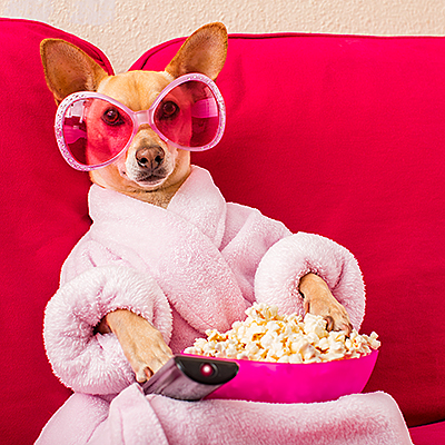 bigstock-Dog-Watching-Tv-On-The-Couch-182734351.jpg