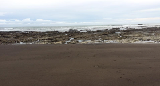 Off the Pacific coast of Costa Rica, the low tide exposes rocks covered in barnacles, seaweed, and other creatures of the intertidal zone. A land mass is visible in the distance, rising from the ocean.