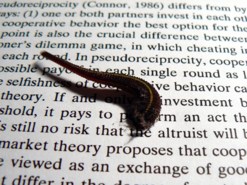 I was sitting at my desk, writing a paper on the flux between parasitism and mutualism in symbiotic species and found this leech creeping across the research I was reading. It had been carried in on my clothes from our leech-ridden garden.  The serendipity was perfect.