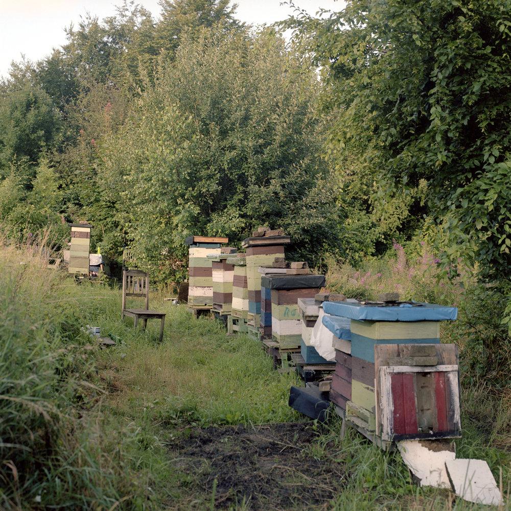 Bee Hives , Helsingborg, Sweden