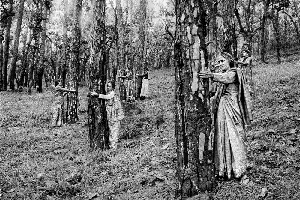 Tree Huggers 004.jpg