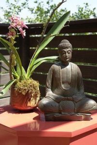 buddha-orchid