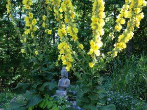 buddha-in-flower-weeds-300x225.jpg