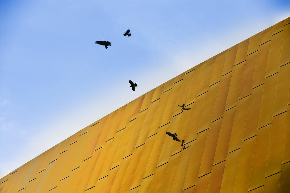 Sportcentrum Den Haag