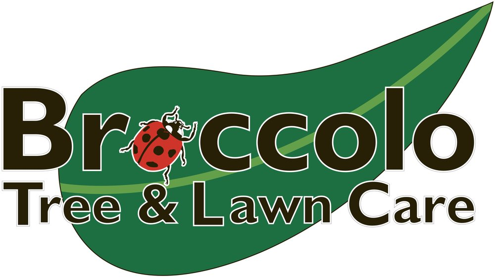 Broccolo Logo.jpg