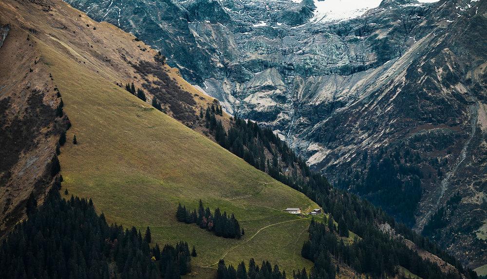 Ziebelnwald.jpg