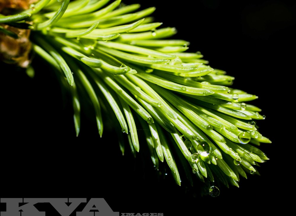 greenneedle.jpg