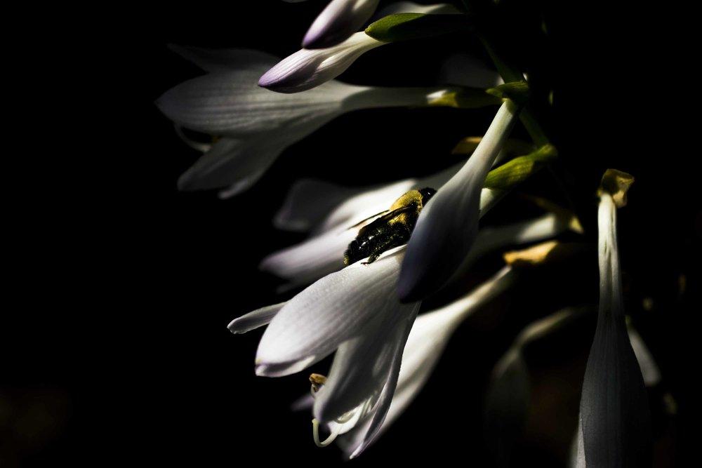 smallbee.jpg