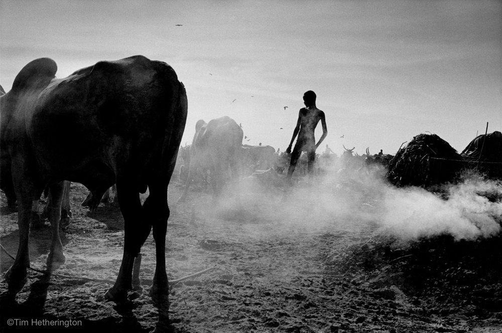 SUDAN. Panyagor. May 2000. Cattle camp. An outbreak of foot and mouth disease affected the precious cattle of the Dinka tribe in South Sudan.