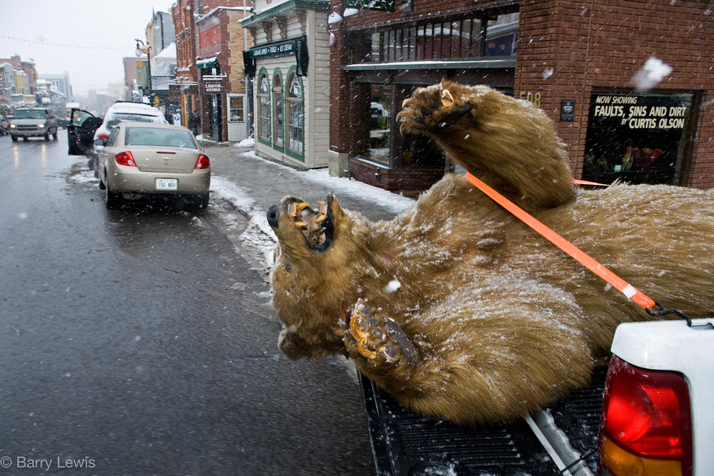 Stuffed grizzly, Sundance Film Festival, USA 2006