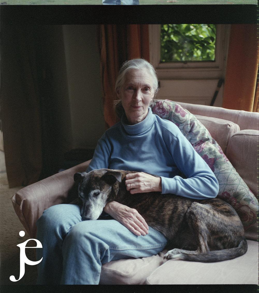Jane Goodall, England, 1999