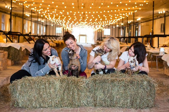 These #BabyGoats will have you giggling through out class. All participants will leave class with a glow, and happy energy! ⠀⠀⠀⠀⠀⠀⠀⠀⠀ Buy your tickets today by clicking link in bio!⠀⠀⠀⠀⠀⠀⠀⠀⠀ #NYGoatYoga class⠀⠀⠀⠀⠀⠀⠀⠀⠀ ⠀⠀⠀⠀⠀⠀⠀⠀⠀ Photo Credit: @Korverphotography⠀⠀⠀⠀⠀⠀⠀⠀⠀ Sent via @planoly #planoly