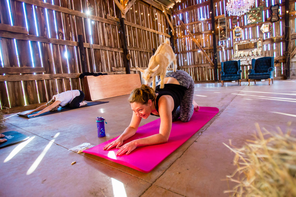 "Danielle b. from brooklyn says… - ""put goat yoga on your bucket list!"""