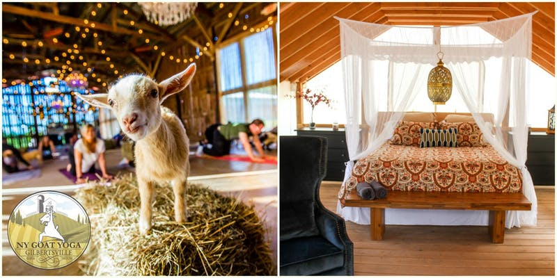goats and glamping.jpg