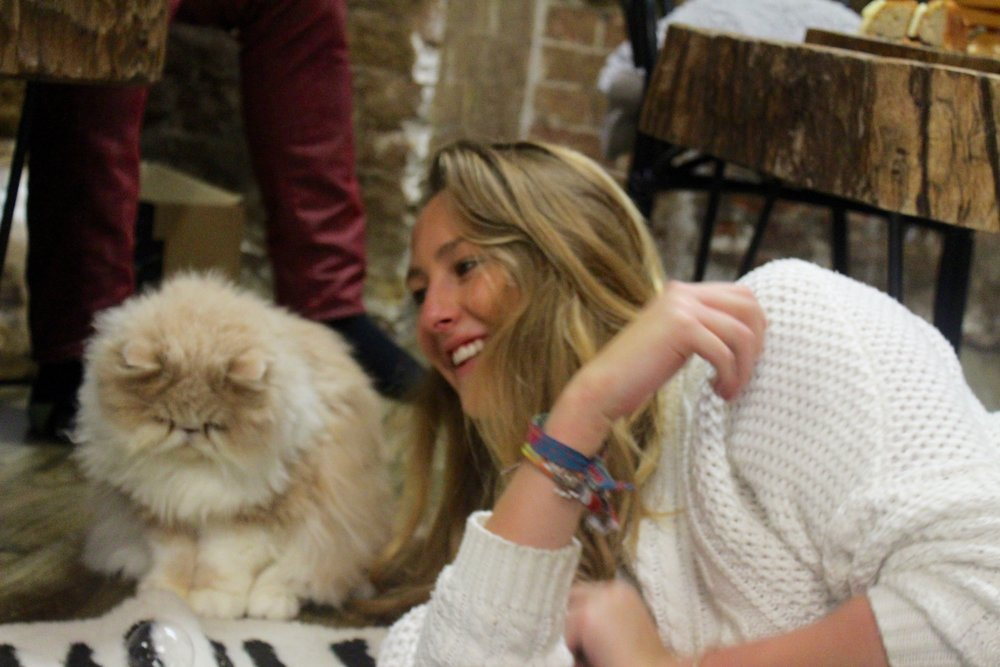 London Cat Village - Location: Shoreditch