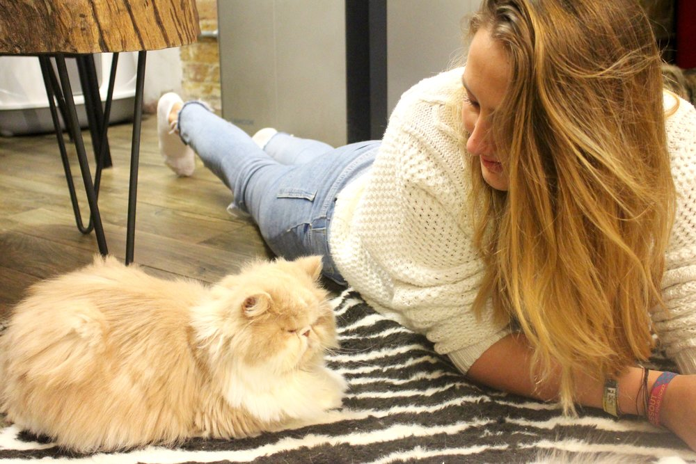 Puurfect afternoon! - If you love cats (Or East London), you should check out the cat cafe. I believe they originated in Japan and have come increasingly popular over here! They wander around whilst you have tea and cake, it really is a cat lovers dream!P x