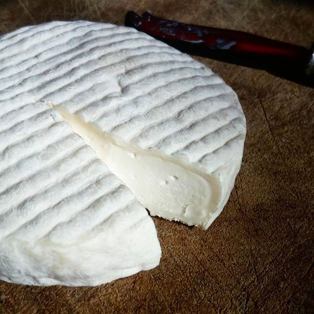 I'm dreaming of a white rinded Christmas, just like the ones we used to know (before the days of freeze dried cultures)! Traditional goat Camembert by @doetietrinks - a natural cheesemaker in the Netherlands.  #allgoodcheeseiswildandfree  #rawmilkcheese  #happyholidays