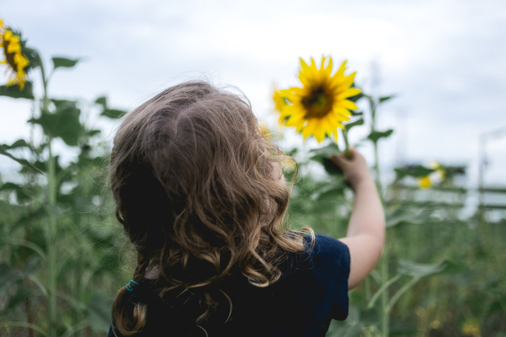 Girl reaching out for sunflower at Kansas State University, Manhattan Kansas. Captured by Renee McDaniel with Renee McDaniel Photography.