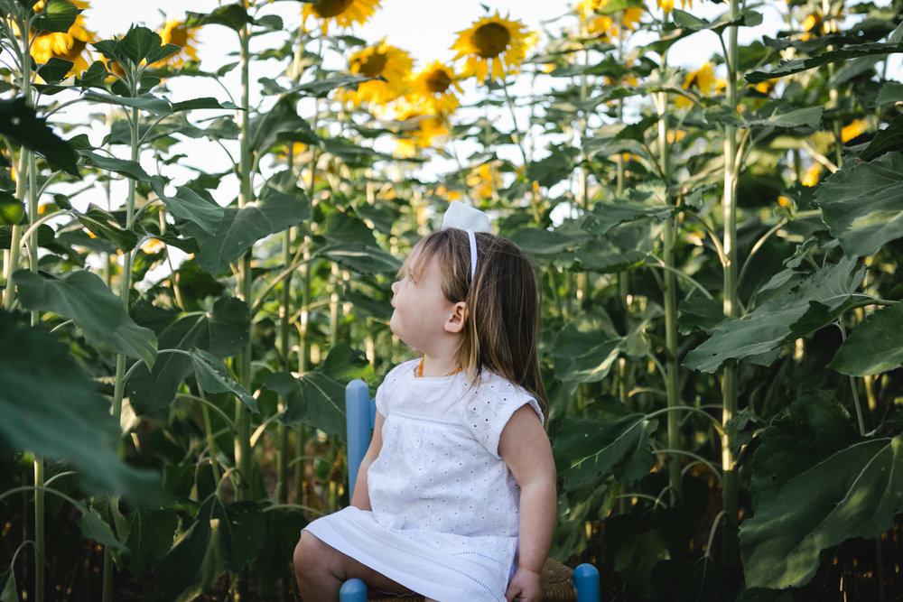 Child sitting in the sunflower field at Kansas State University in Manhattan, Kansas. Captured by photographer, Renee McDaniel of Renee McDaniel Photography.