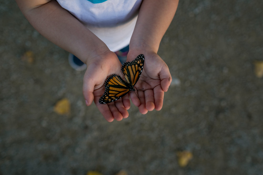 Documentary Lifestyle Photograph of a toddler holding a butterfly. Captured by Manhattan Kansas Photographer, Renee McDaniel