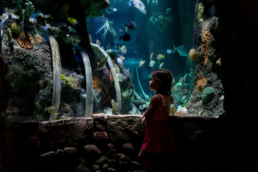 Captured by Best Documentary Family Photographer, Renee McDaniel of Renee McDaniel Photography in Manhattan Kansas. Photographed at SeaLife Aquarium, Kansas City Missouri.