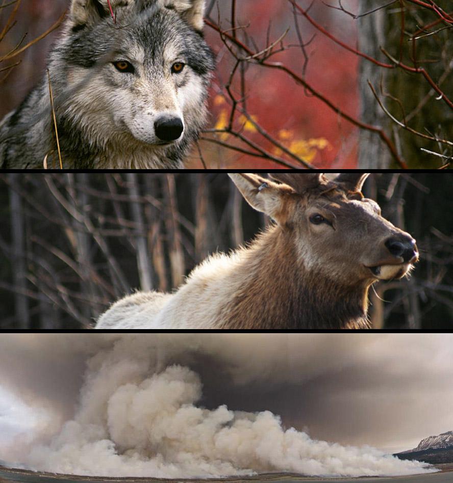 FirewolfElk.jpg