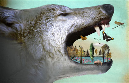 """Wolves touch the whole web of life."" Photo Credit: Terra Magazine, Oregon State University, 2008"