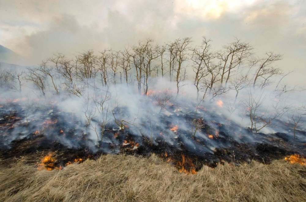 Prescribed Fire, Waterton Lakes National Park Courtesy Parks Canada