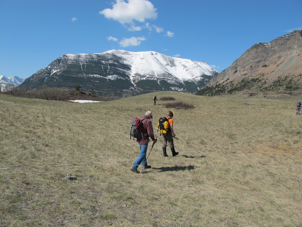 Volunteers Doing Track Transect Work, Photo by Cristina Eisenberg
