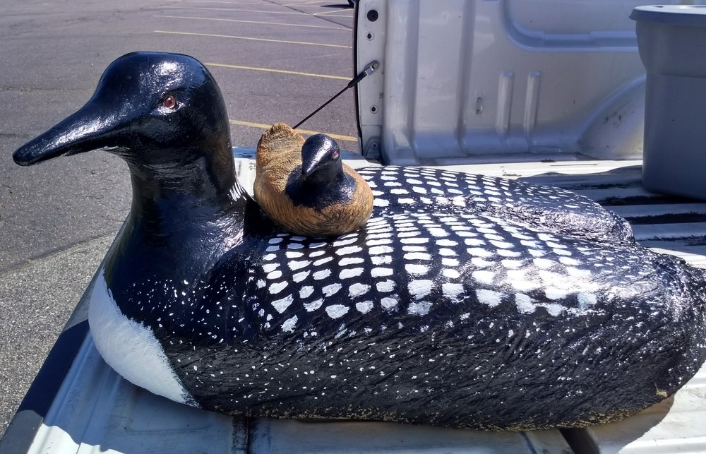 "This chained sawed carved life size ""Loon and Chick"" is a small sample of the live auction held Oct. 13 at 10 am"