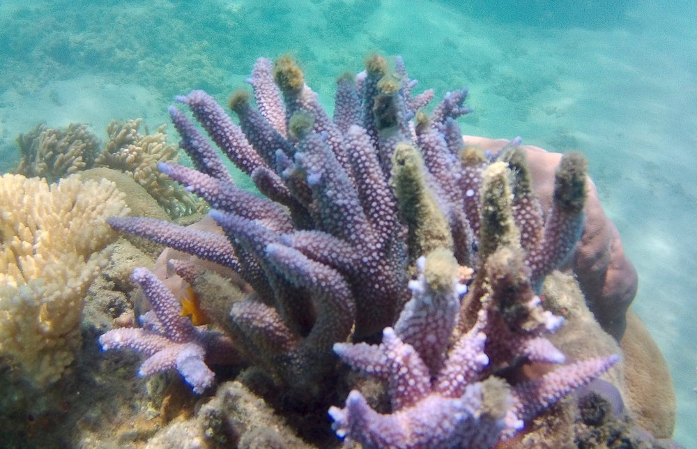 GREAT BARRIER REEF -