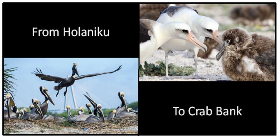 Audubon.png