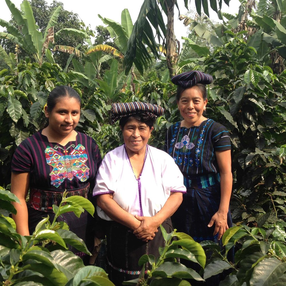 3 Women in Coffee Field.jpg
