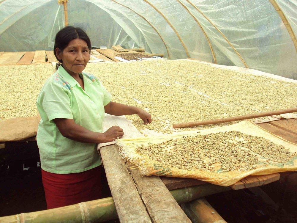Col -Coffee drying.jpg