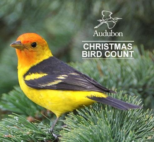 Christmas Bird.Christmas Bird Count Admiralty Audubon Society